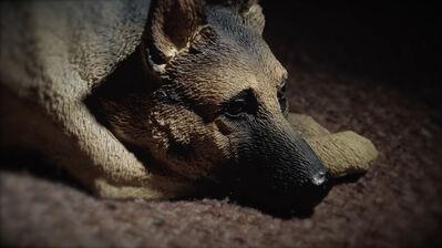 Wong Wai Yin, 'The dog that won't be trained', 2016