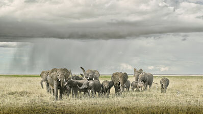 David Burdeny, 'Elephant Day Care, Amboseli, Kenya', 2019