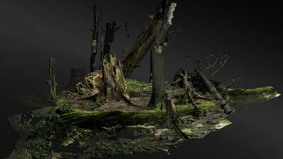 Persijn & Margit Broersen & Lukács, 'Forest on Location, Old Growth', 2019