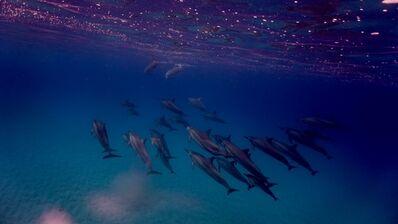 Yuya Hasegawa, 'Swimming with the Dolphins 2', 2017