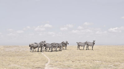 David Burdeny, 'Zebra Plains, Maasai Mara, Kenya', 2019