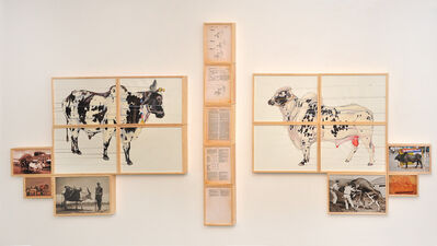 Akshay Raj Singh Rathore, 'Bull/Bullock', 2015