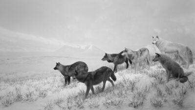 Hiroshi Sugimoto, 'Alaskan Wolves', 1994