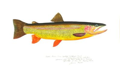 James Prosek, 'Snake River Fine-Spotted Cutthroat Trout', 1999