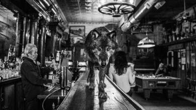 David Yarrow, 'The Wolf Of Main Street III', 2017