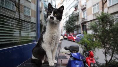 Ovidiu Anton, 'Street Cat Deluxe', 2013