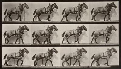 Eadweard Muybridge, 'Animal Locomotion: Plate 567 (Horse Walking)', 1887