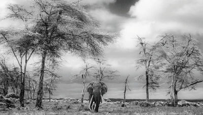 David Yarrow, 'The Fairytale', 2017