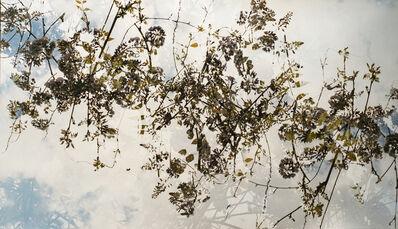 Bryan Graf, 'Confluence Canopy', 2017
