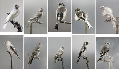 Carsten Höller, 'Untitled (Birds) (A - J)', 2006