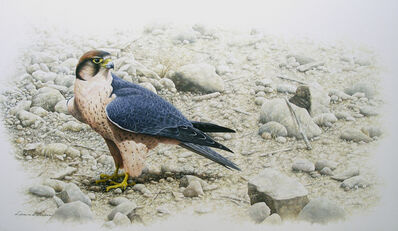 Léon van der Linden, 'Lanner falcon'
