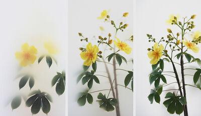 Wu Chi-Tsung, 'Still Life 012 - Buttercup Tree', 2019