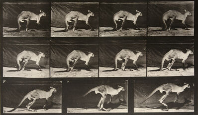 Eadweard Muybridge, 'Animal Locomotion: Plate 751 (Kangaroo Jumping)', 1887