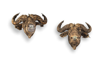 Wim Botha, 'Buffalo Heads'