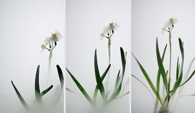 Wu Chi-Tsung, 'Still Life 007- Daffodil', 2018