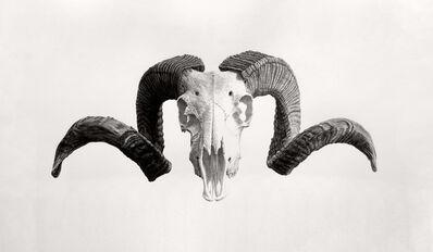 Joel Daniel Phillips, 'Ram', 2019