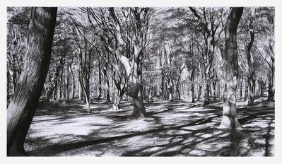 Kees van der Knaap, 'Tangled wood 1', 2019