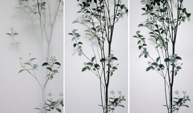 Wu Chi-Tsung, 'Still Life 008 - Pearlbush', 2018