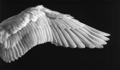 Robert Longo, 'Untitled (Gabriel's Wing)', 2016