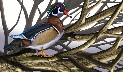 Ink Dwell (Jane Kim), 'Wood Duck', 2021