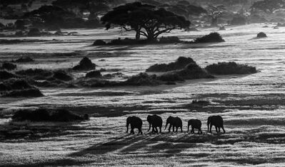 David Yarrow, 'Dawn Commute', 2014