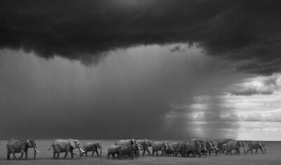 David Yarrow, 'The Gathering Storm, Amboseli, Kenya ', 2012