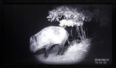 "Elmas Deniz, 'Eluding ""humans"" (Wild Boar)', 2019"