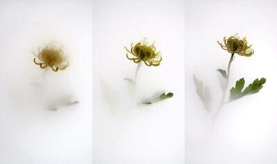 Wu Chi-Tsung, 'Still Life 006 - Chrysanthemum', 2017