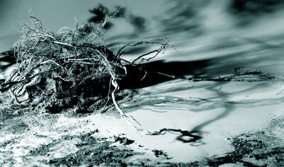 Holly King, 'Windblown Tangle', 2006