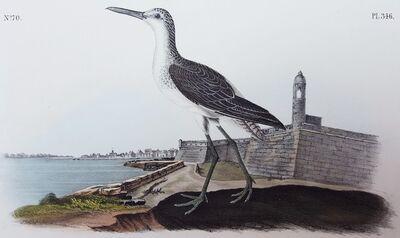 John James Audubon, 'Greenshank (St. Augustine, FL', 1840-1844