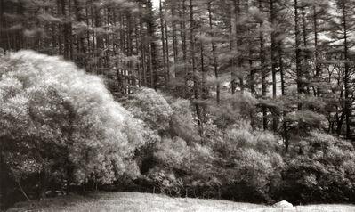 Dick Arentz, 'Thornthwaite Forest, Cumbria, England', 1985