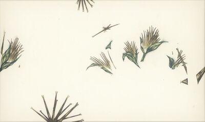 Huang Yu-Hao, 'Bidens_Seed', 2021