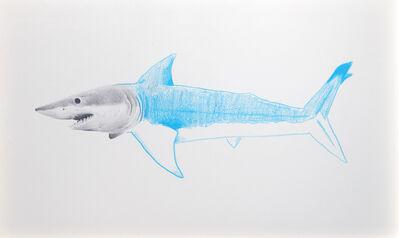 Andres Layos, 'Tiburón azul', 2016