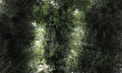 Sang-sun Bae, 'Quercus Phillyraeoides (Ubamegashi Oak Forest ii)', 2019