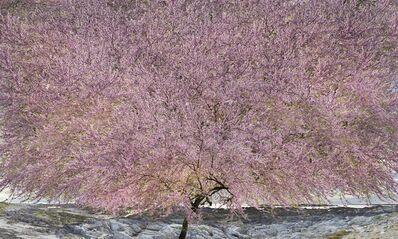 Jean-François Rauzier, 'Wisdom Tree', 2019