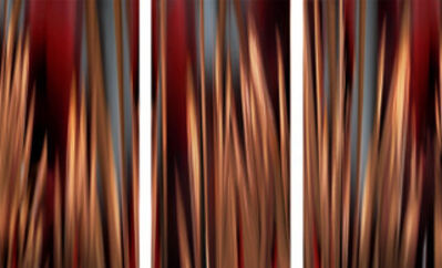 Michel Tabori, 'Through the Redwoods #1, #2 & #3, 2018, Triptych', 2018