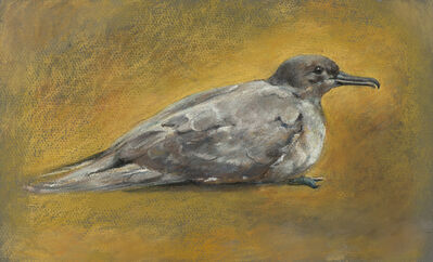 Anne C. Weary, 'Pigeon', ca. 1975