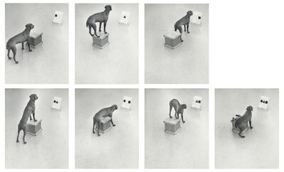 William Wegman, 'Before / On / After: Permutations', 1972