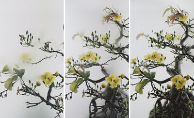 Wu Chi-Tsung, 'Still Life 014 - Yellow Mai Flower 黃梅', 2019