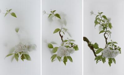 Wu Chi-Tsung, 'Still Life 013 - Bougainvillea (Paper Flower) 九重葛', 2020