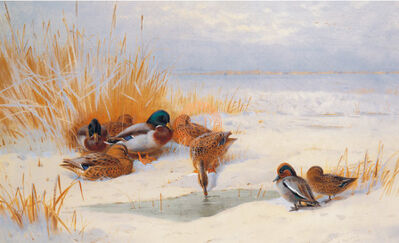 Sir Archibald Thorburn, FSZ, 'Mellard and Teal', 21st Century
