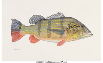 Flick Ford, 'World Record Peacock Bass, Big: The 50 Greatest World Record Catches interior illustration', 2008