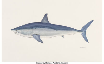 Flick Ford, 'Shortfin Blue Mako Shark,  Big: The 50 Greatest World Record Catches interior illustration', 2008