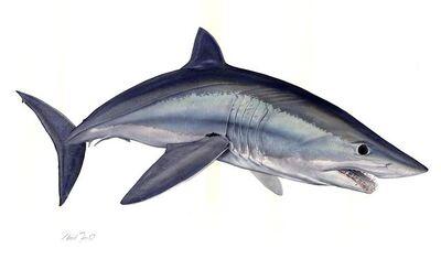 Flick Ford, 'Mako Shark', 2017