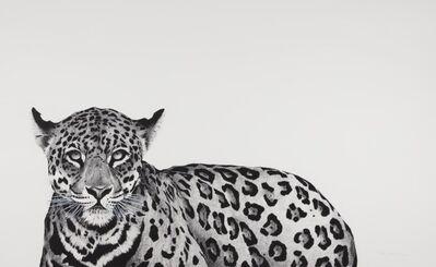 Rose Corcoran, 'Jaguar', 2019