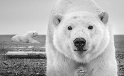David Yarrow, 'Hello', ca. 2015