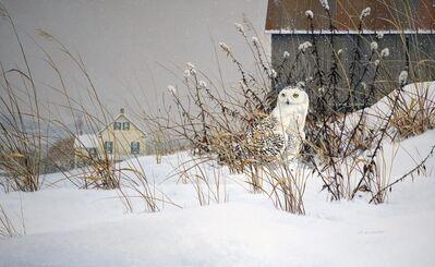 Douglas R. Laird, 'Snowy White in Winter', 2015