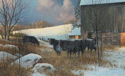 Douglas R. Laird, ' Black Angus in Winter', 2013