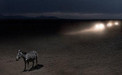 Nick Brandt, 'Zebra & Headlights', 2018