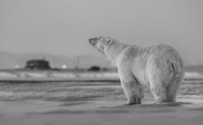 David Yarrow, 'My Place or Yours', 2016
